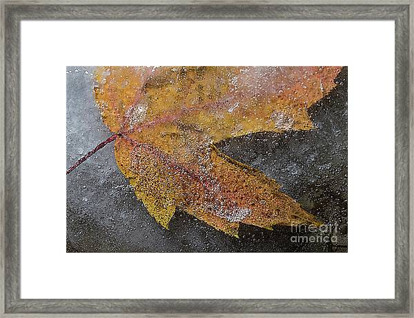 Leaf In Ice 3 Framed Print by Jim Wright