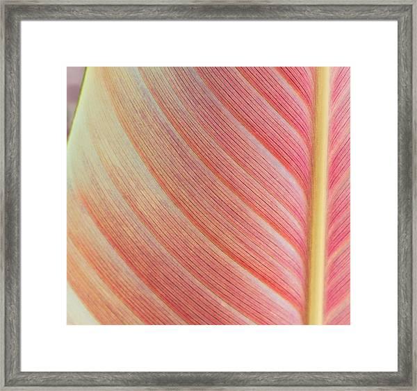 Leaf In Pink  Framed Print