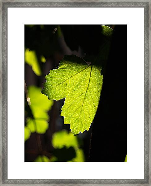 Leaf Light I Framed Print