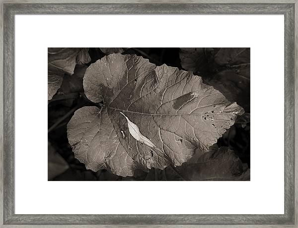 Leaf On A Leaf Framed Print