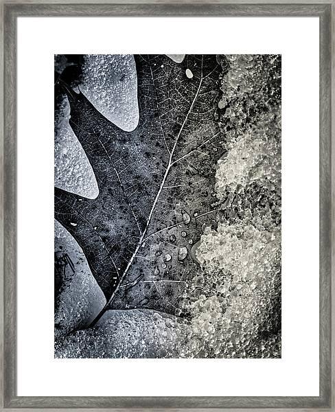 Leaf On Ice Framed Print