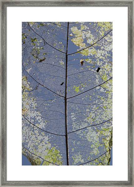 Framed Print featuring the photograph Leaf Structure by Debbie Cundy