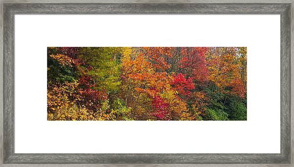 Leaf Tapestry Framed Print