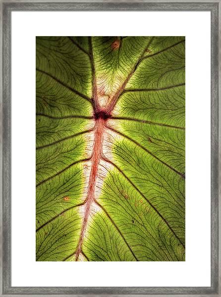 Leaf With Veins Framed Print
