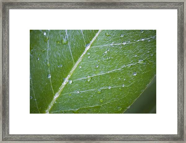 Leaf With Water Droplets Framed Print