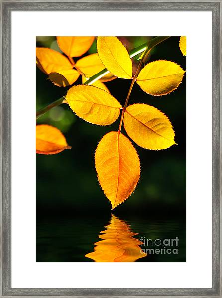 Leafs Over Water Framed Print