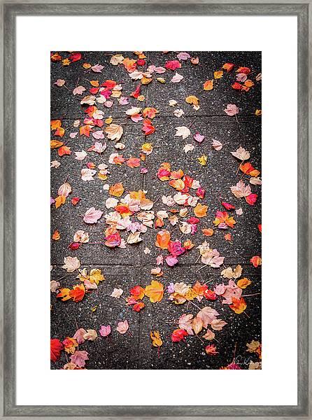 Leafy Autumn Walk Framed Print