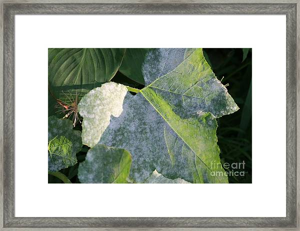 Calming Leafy Glade Framed Print