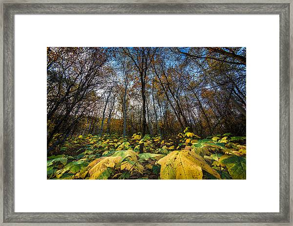 Leafy Yellow Forest Carpet Framed Print