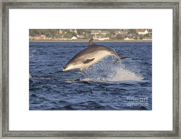 Jolly Jumper - Bottlenose Dolphin #40 Framed Print