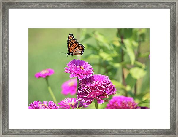 Leaping Butterfly Framed Print