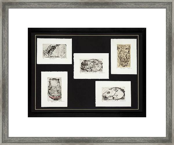 Learning To Love Rats More Framed Print
