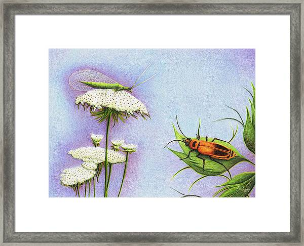 Leather And Lace... For The Gardeners Framed Print