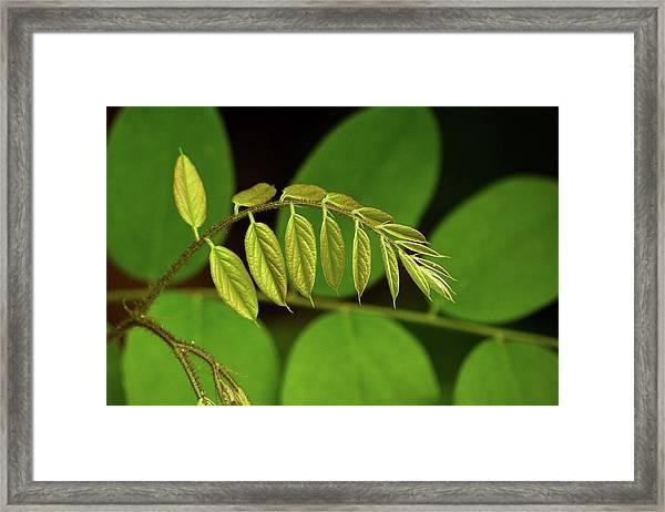 Leaves #1 Framed Print