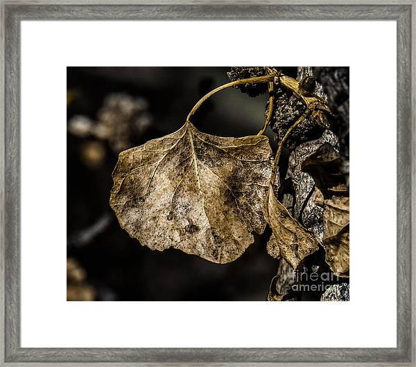 Leaves 4 Framed Print