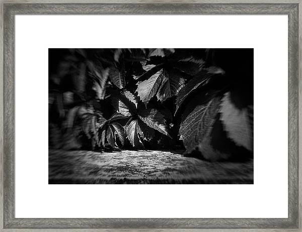 Leaves #9671 Framed Print