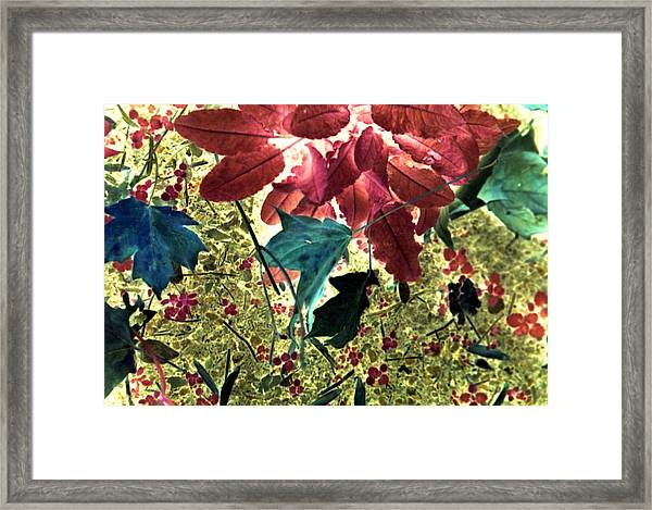 Leaves And Berries - Inversed Framed Print by Randy Muir