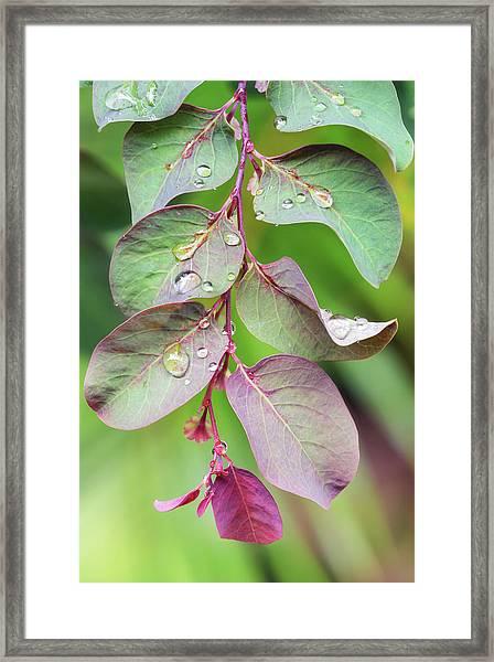 Leaves And Raindrops Framed Print