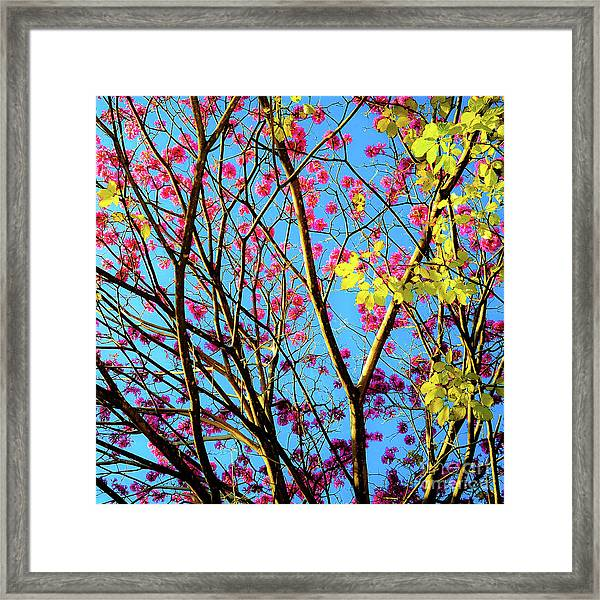 Leaves And Trees 980 Framed Print