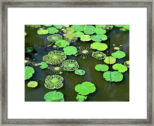 Framed Print featuring the photograph Leaves Imagery by Yen
