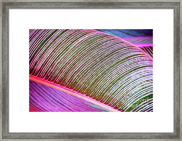 Leaves In Bright Colors 546 Framed Print