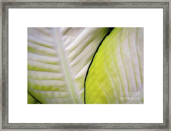 Leaves In White Framed Print
