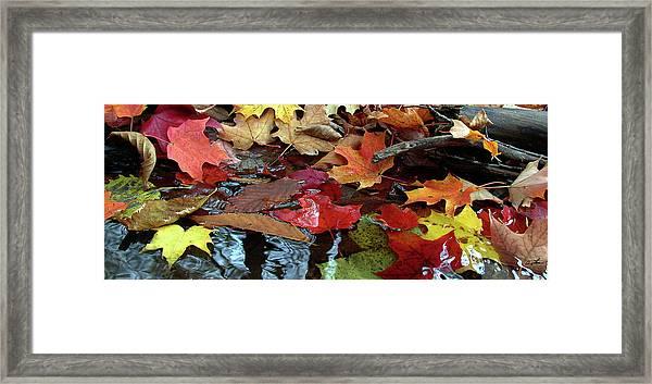 Leaves Of Color Framed Print