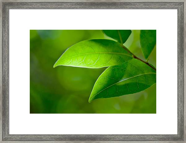 Leaves Of Green Framed Print
