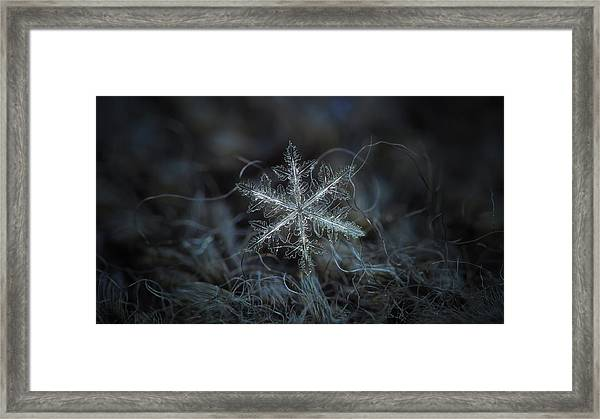 Leaves Of Ice, Panoramic Version Framed Print