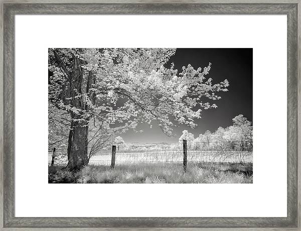 Leaves Of Spring Framed Print