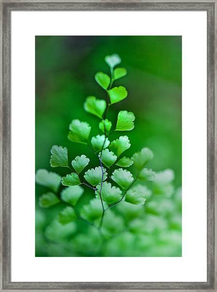 Leaves Rising Framed Print