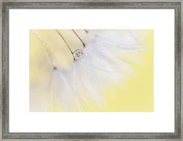 Lemon Drop Framed Print