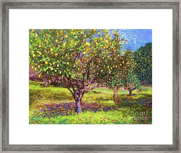 Lemon Grove Of Citrus Fruit Trees Framed Print