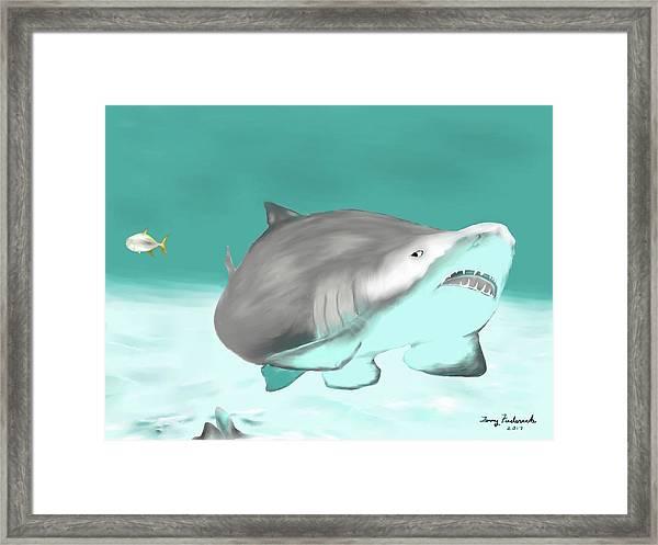 Lemon Shark Framed Print