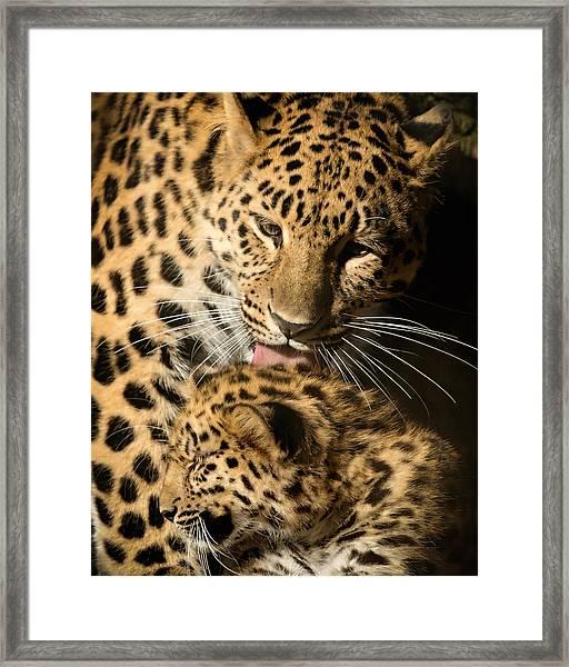 Leopard Cub Love Framed Print