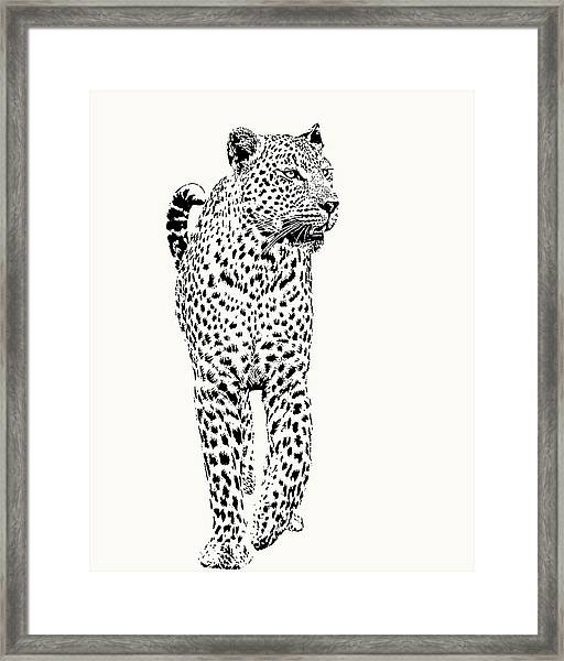 Leopard On Patrol, Front-on View Framed Print