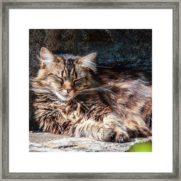 Let Me Sleep... Framed Print