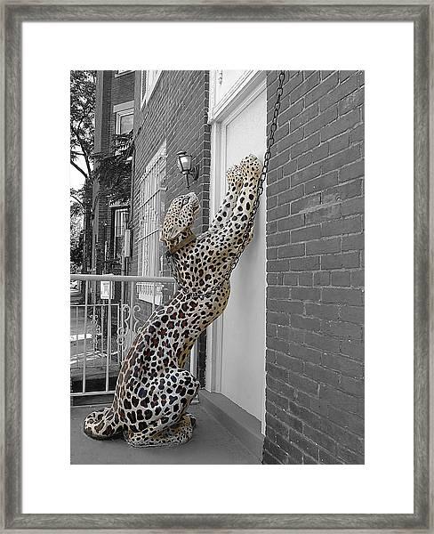Let The Cat In Framed Print