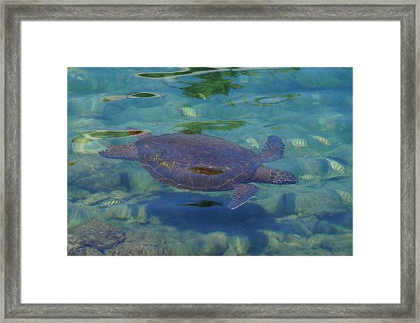 Let Us Lead The Way Framed Print