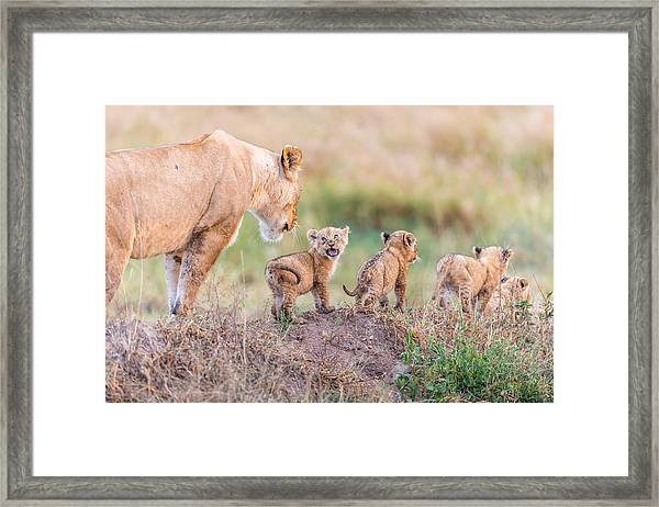 Let's Go Mom Framed Print by Ted Taylor