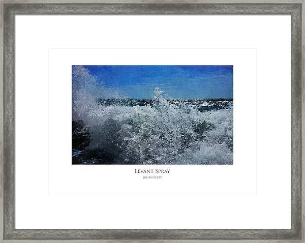 Levant Spray Framed Print