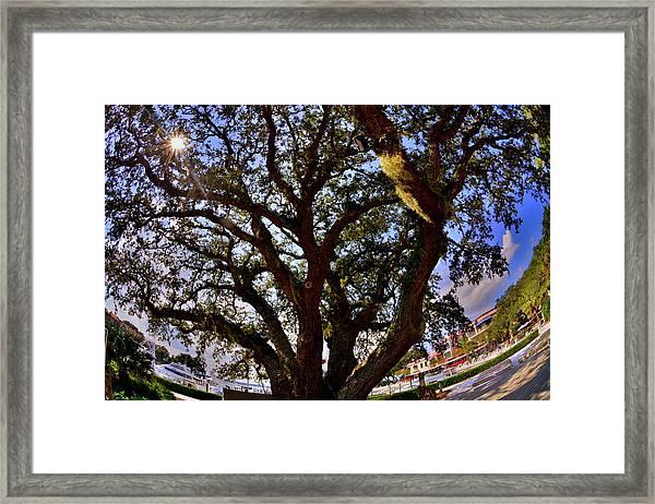 Liberty Oak Harbour Town Hilton Head Sc Framed Print