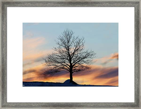 Liberty Tree Sunset Framed Print