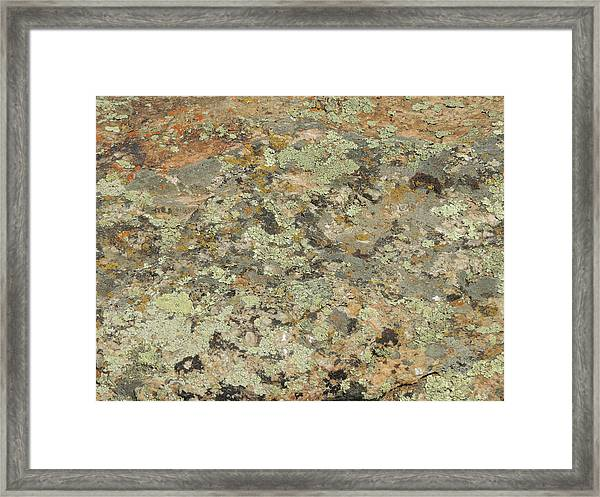 Lichens On Boulder Framed Print