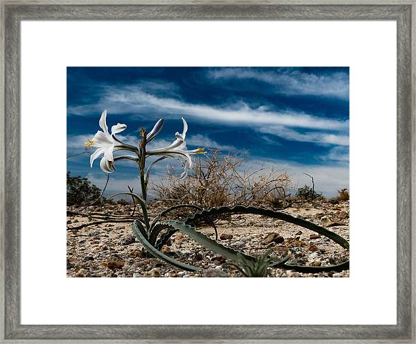 Life Amoung The Weeds Framed Print