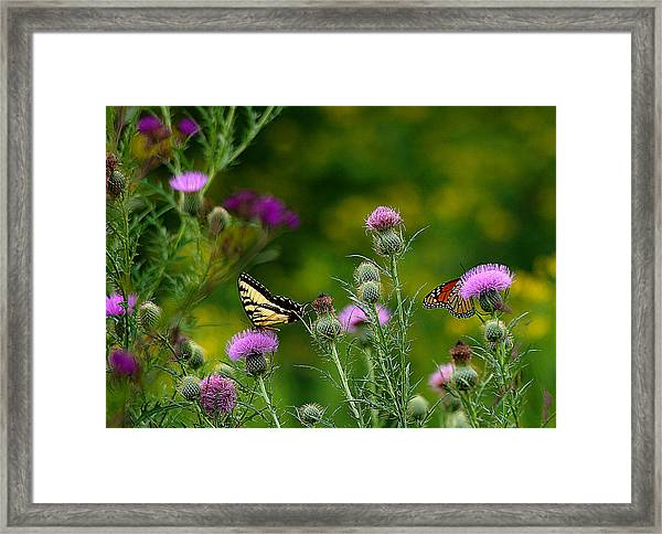 Life In The Meadow Framed Print