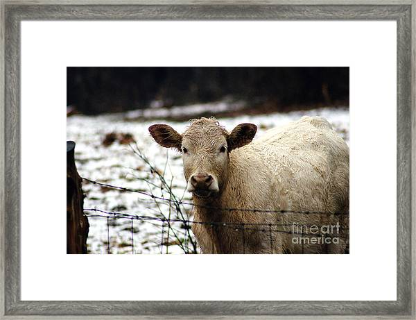 You Know It's You ,who Calls Me Back Here Babe Framed Print