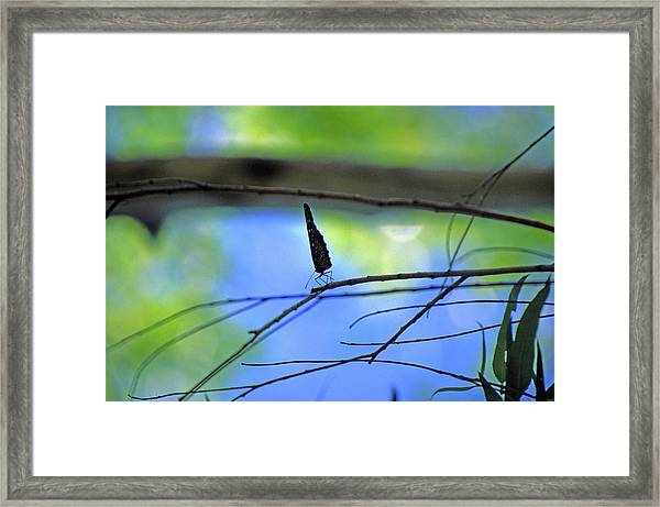 Life On The Edge Framed Print