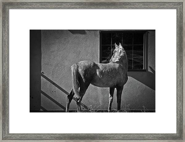 Framed Print featuring the photograph Light And Shadow by Catherine Sobredo