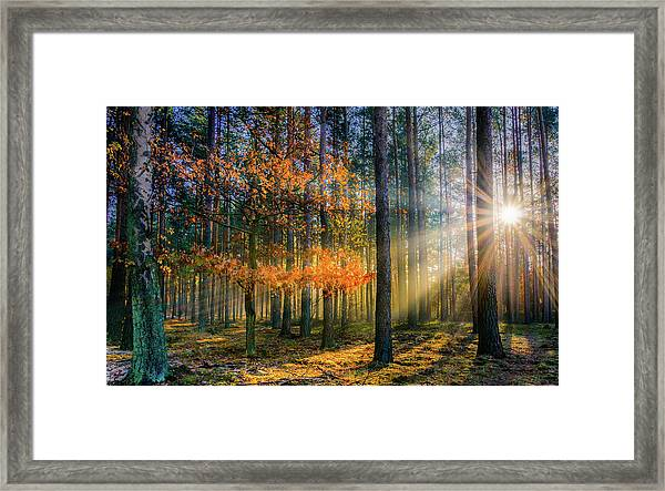 Light Catcher Framed Print